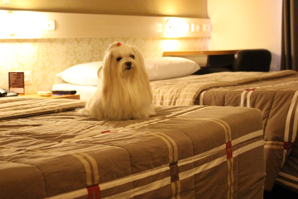 Hotel 10, pet friendly